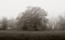 Feldertour bei Nebel im November