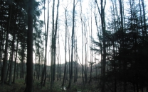 Waldtour im Dezember