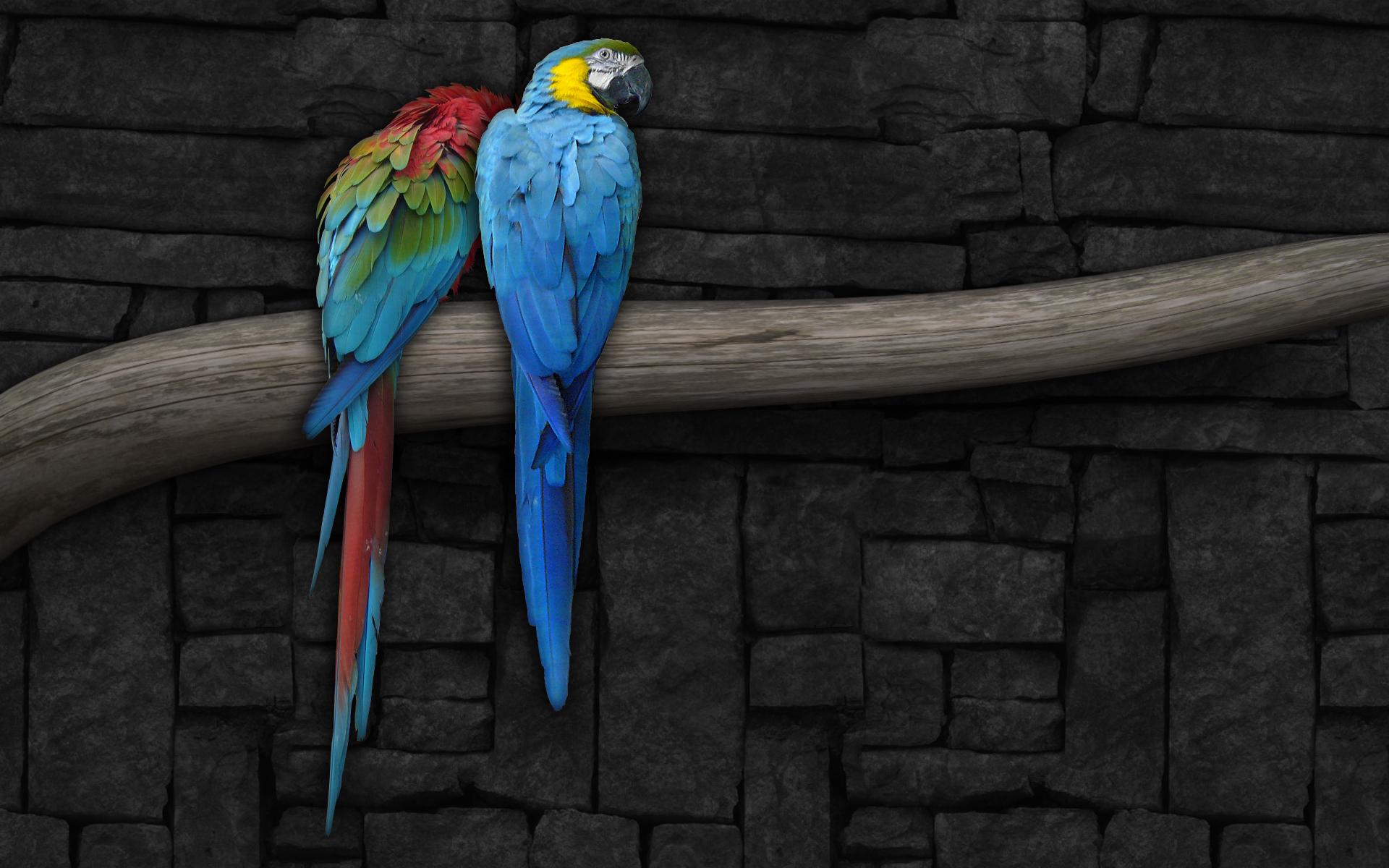 Papageien auf Ast vor Steinmauer
