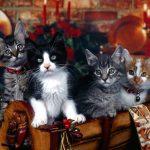 Katzen in Holzkorb an Weihnachten