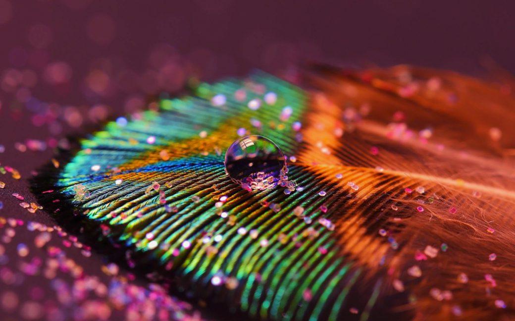 Farbenfrohe Feder
